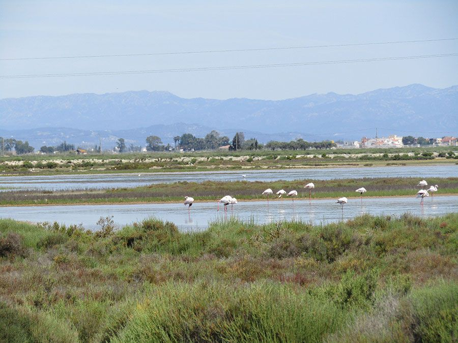 flamingo-ebro