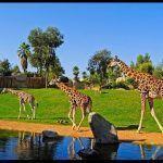 Биопарк Валенсии: место обитания животных Африки