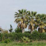 Спаржа — экологический продукт Каталонии