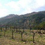 Priorat (Приорат): вино, миндаль и пейзажи